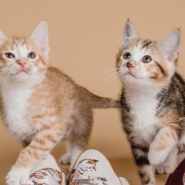 Whiskers N Paws: HK Pet Store → Shop Food & Supplies Online